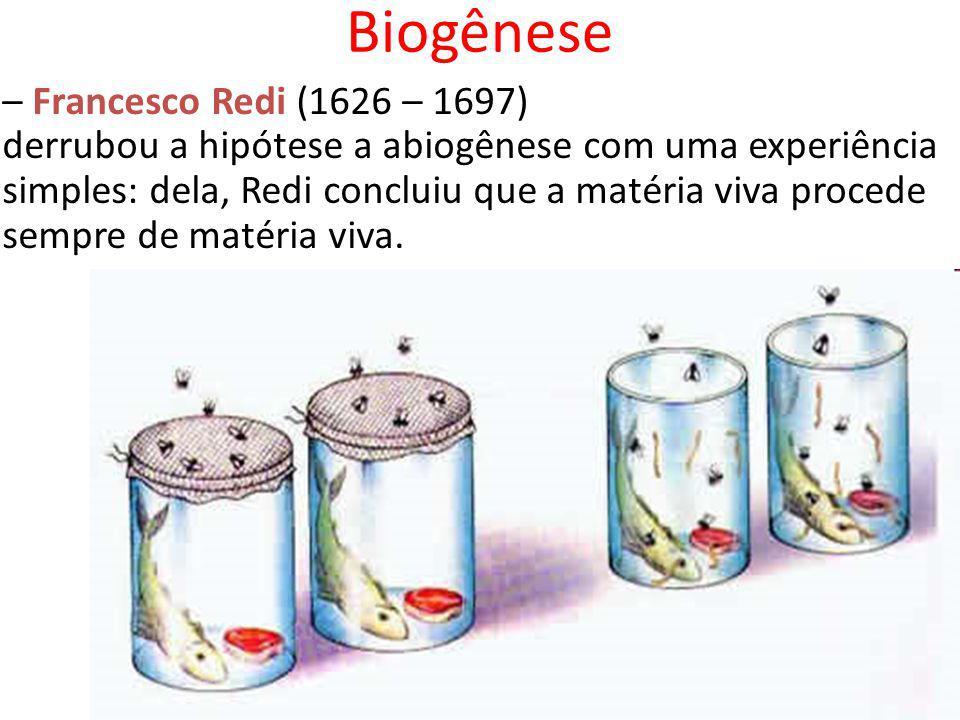 Biogênese – Francesco Redi (1626 – 1697) derrubou a hipótese a abiogênese com uma experiência simples: dela, Redi concluiu que a matéria viva procede sempre de matéria viva.