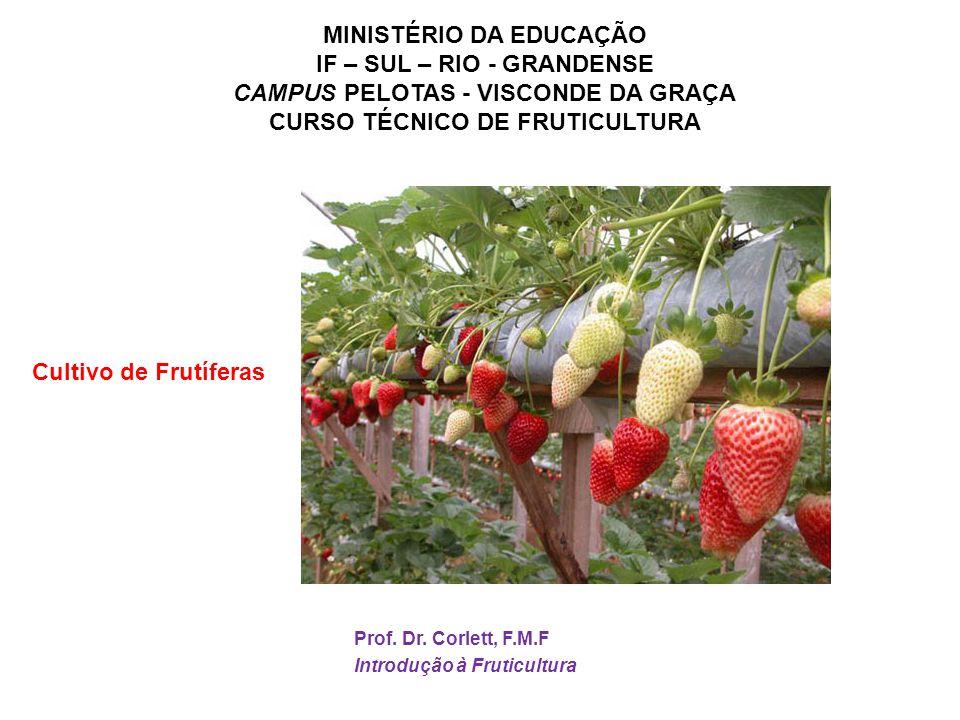 MINISTÉRIO DA EDUCAÇÃO IF – SUL – RIO - GRANDENSE CAMPUS PELOTAS - VISCONDE DA GRAÇA CURSO TÉCNICO DE FRUTICULTURA Prof. Dr. Corlett, F.M.F Introdução