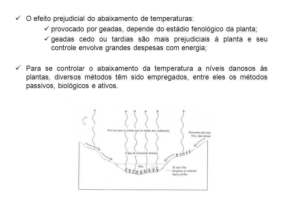 O efeito prejudicial do abaixamento de temperaturas: provocado por geadas, depende do estádio fenológico da planta; geadas cedo ou tardias são mais pr