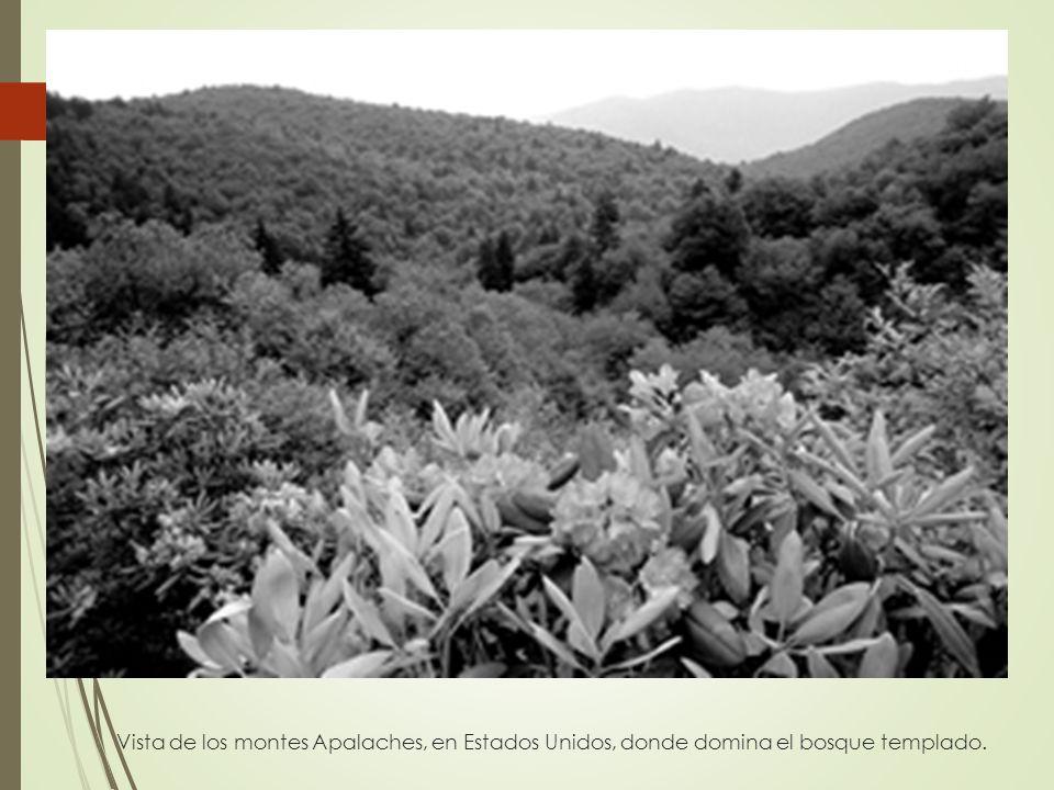Vista de los montes Apalaches, en Estados Unidos, donde domina el bosque templado.