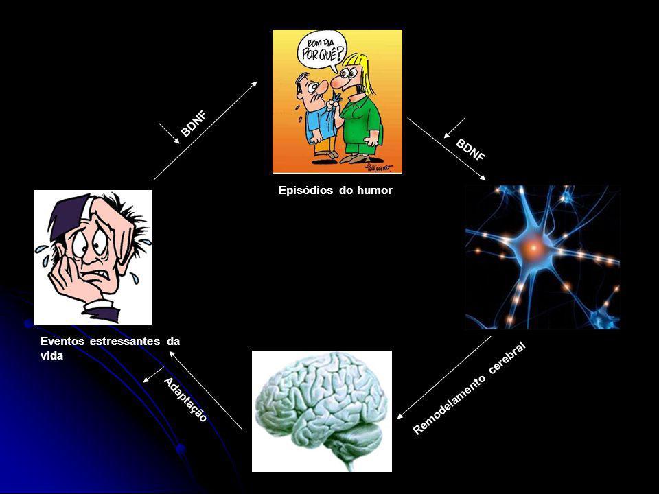 Adaptação Remodelamento cerebral Episódios do humor Eventos estressantes da vida BDNF