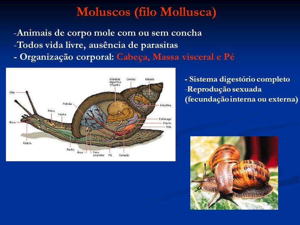 Moluscos (filo Mollusca) -Animais de corpo mole com ou sem concha -Todos vida livre, ausência de parasitas - Organização corporal: Cabeça, Massa visce