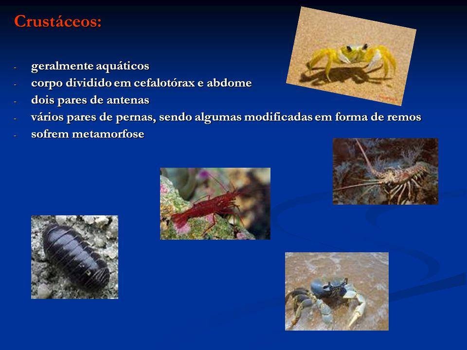 Crustáceos: - geralmente aquáticos - corpo dividido em cefalotórax e abdome - dois pares de antenas - vários pares de pernas, sendo algumas modificada