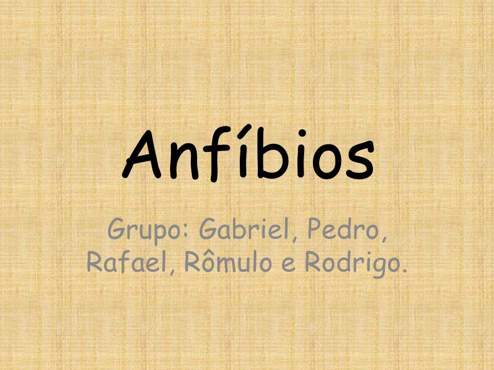 Anfíbios Grupo: Gabriel, Pedro, Rafael, Rômulo e Rodrigo.