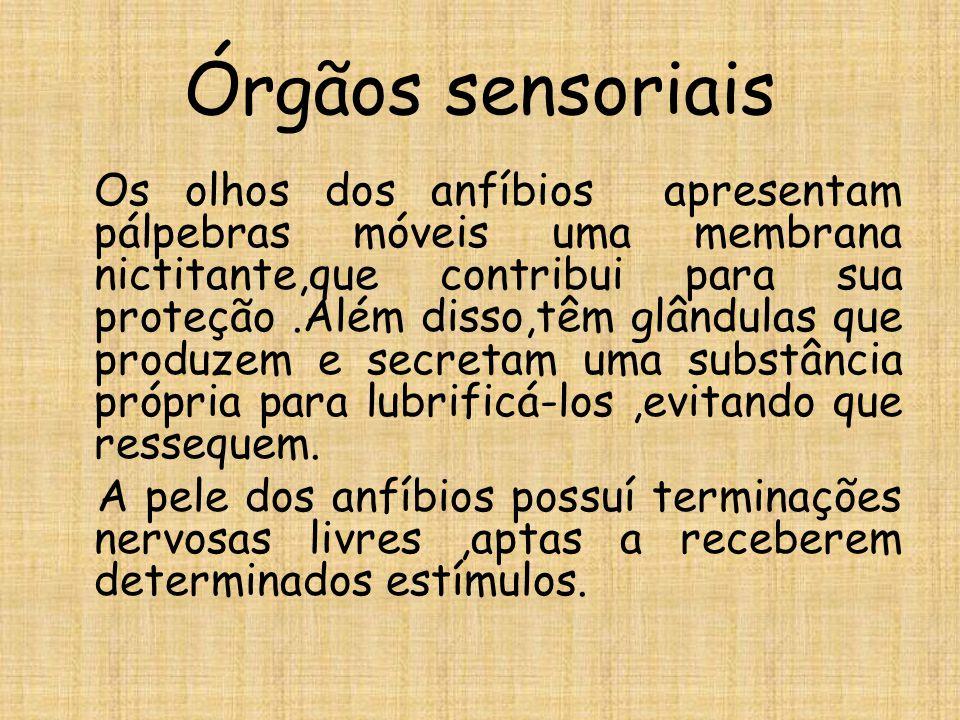 Órgãos sensoriais Os olhos dos anfíbios apresentam pálpebras móveis uma membrana nictitante,que contribui para sua proteção.Além disso,têm glândulas que produzem e secretam uma substância própria para lubrificá-los,evitando que ressequem.