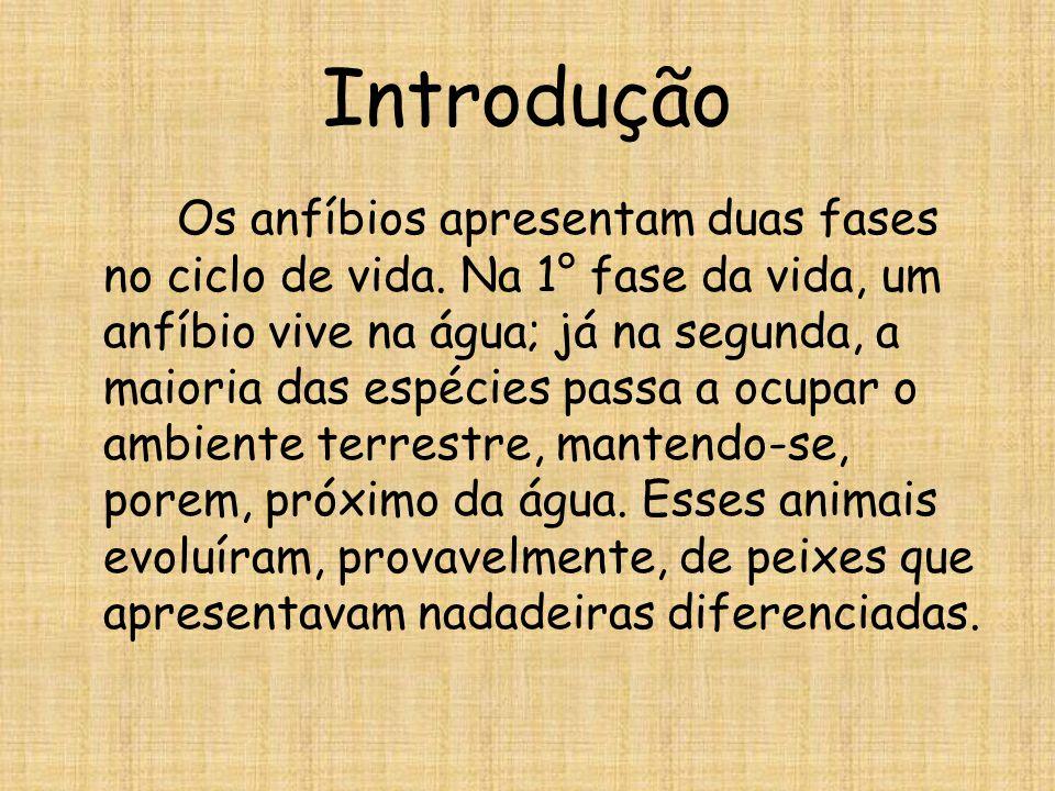 Classificação Anuros Os anuros (do grego a: sem + aura: cauda) são anfíbios sem cauda na fase adulta.
