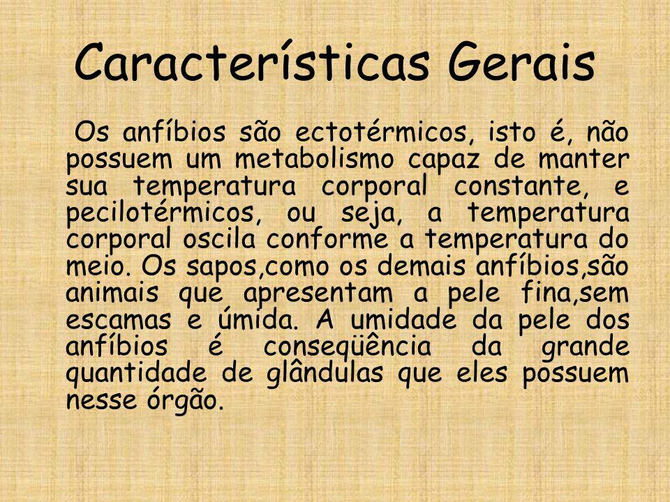 Características Gerais Os anfíbios são ectotérmicos, isto é, não possuem um metabolismo capaz de manter sua temperatura corporal constante, e pecilotérmicos, ou seja, a temperatura corporal oscila conforme a temperatura do meio.
