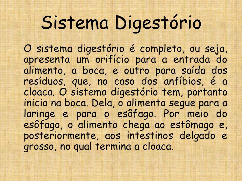 Sistema Digestório O sistema digestório é completo, ou seja, apresenta um orifício para a entrada do alimento, a boca, e outro para saída dos resíduos, que, no caso dos anfíbios, é a cloaca.
