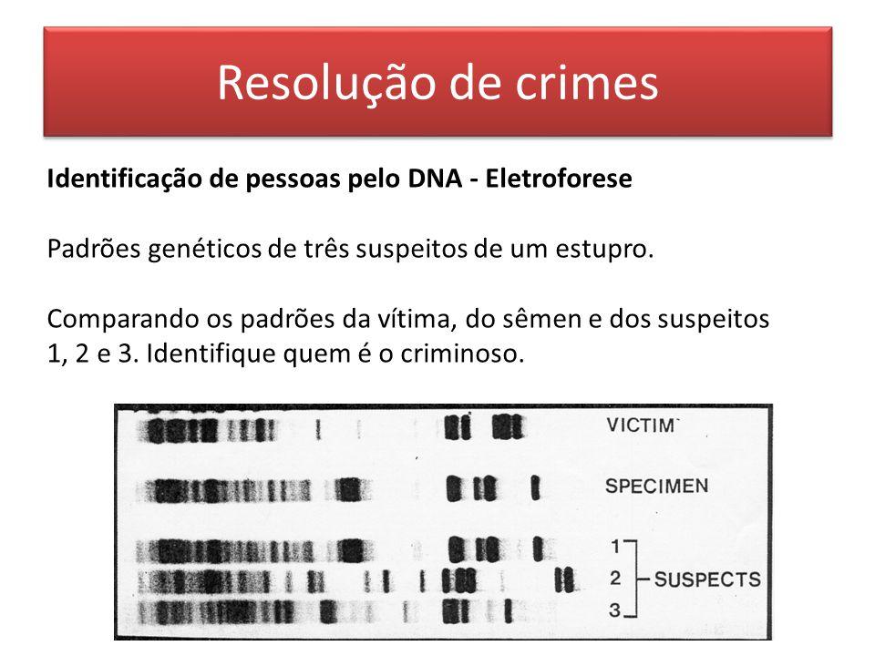 Resolução de crimes Identificação de pessoas pelo DNA - Eletroforese Padrões genéticos de três suspeitos de um estupro.