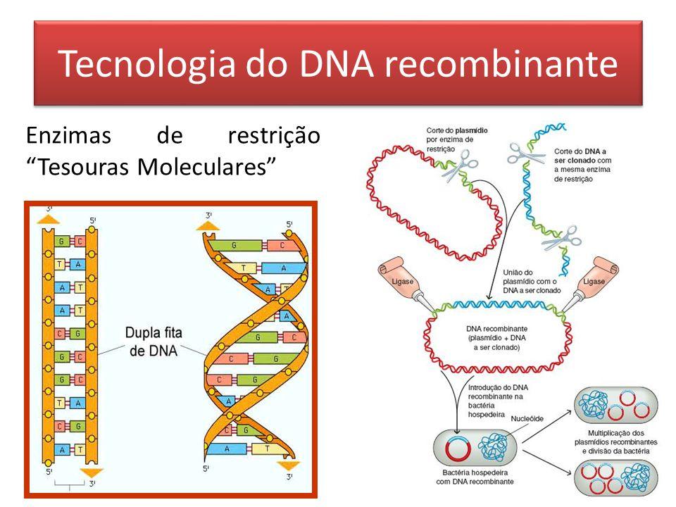 Tecnologia do DNA recombinante Enzimas de restrição Tesouras Moleculares