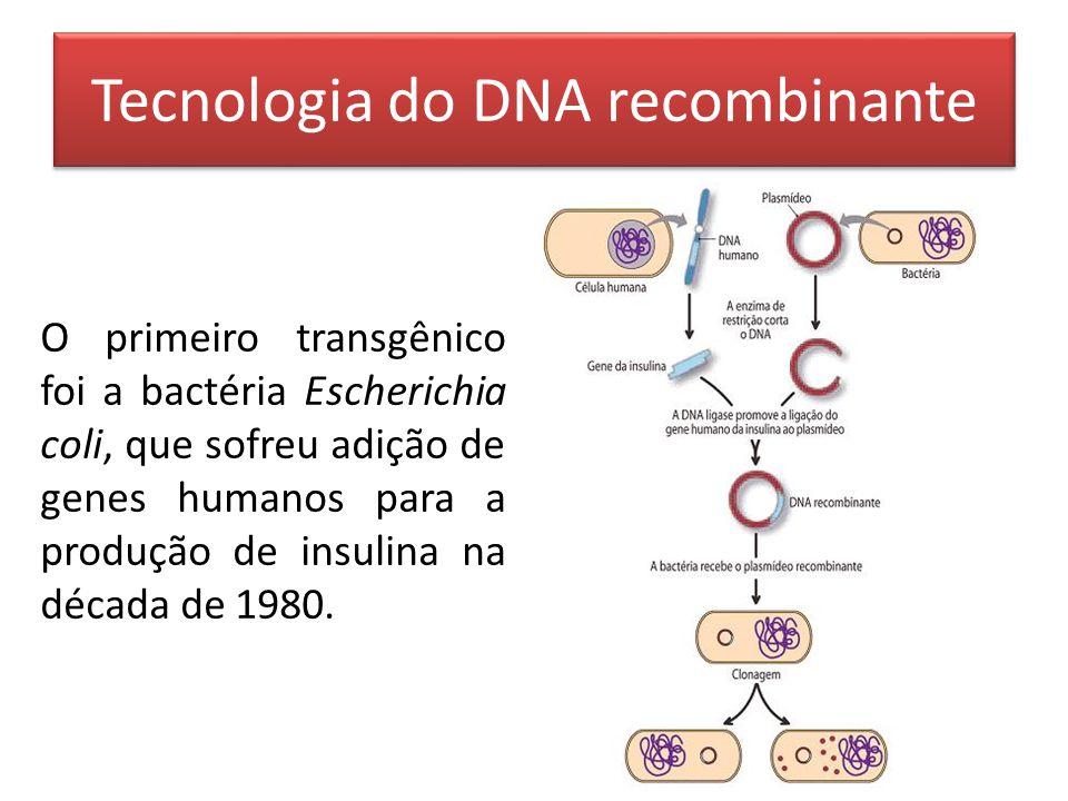 O primeiro transgênico foi a bactéria Escherichia coli, que sofreu adição de genes humanos para a produção de insulina na década de 1980.