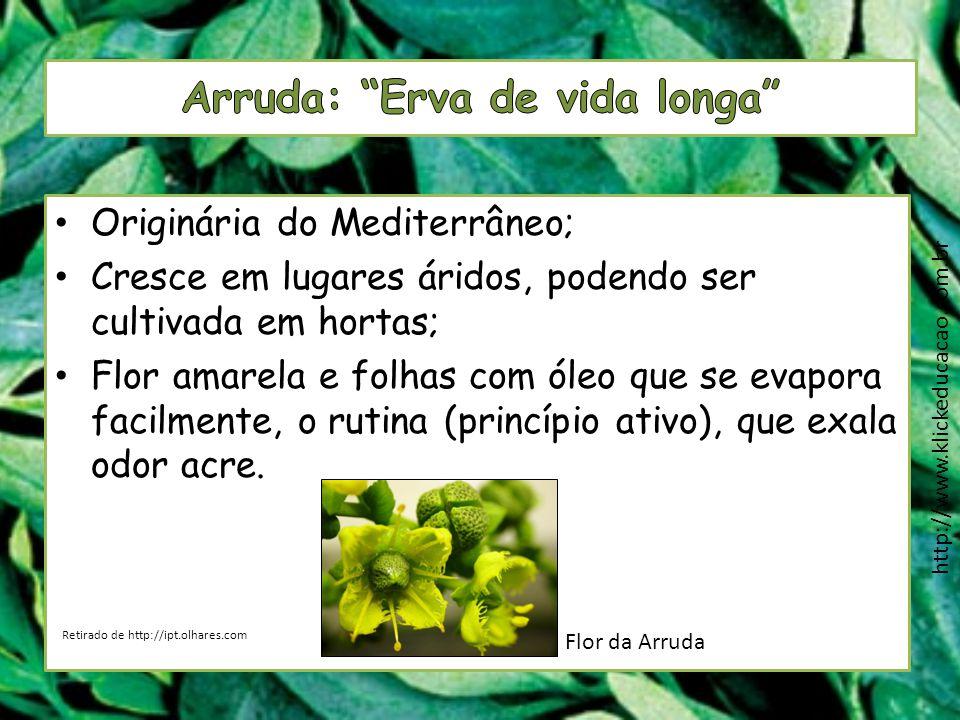 Originária do Mediterrâneo; Cresce em lugares áridos, podendo ser cultivada em hortas; Flor amarela e folhas com óleo que se evapora facilmente, o rut