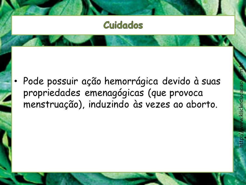 Pode possuir ação hemorrágica devido à suas propriedades emenagógicas (que provoca menstruação), induzindo às vezes ao aborto. http://www.klickeducaca