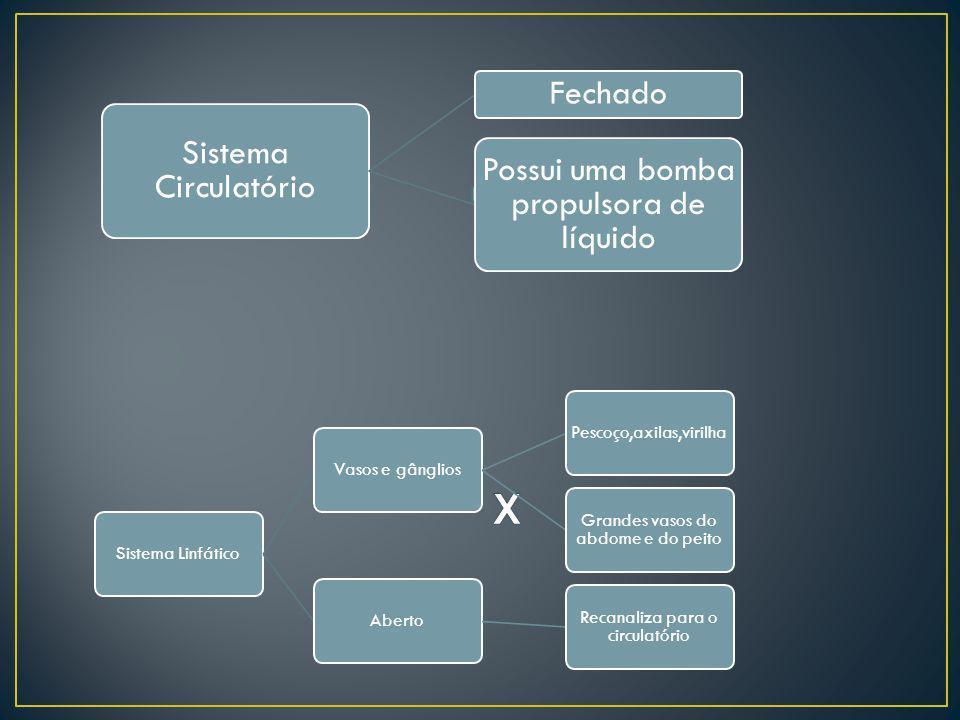 Sistema Circulatório Fechado Possui uma bomba propulsora de líquido Sistema LinfáticoVasos e gângliosPescoço,axilas,virilha Grandes vasos do abdome e