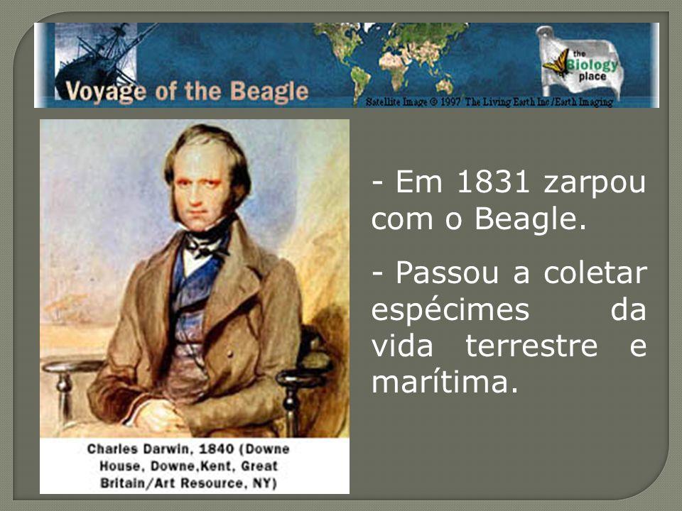 - Em 1831 zarpou com o Beagle. - Passou a coletar espécimes da vida terrestre e marítima.