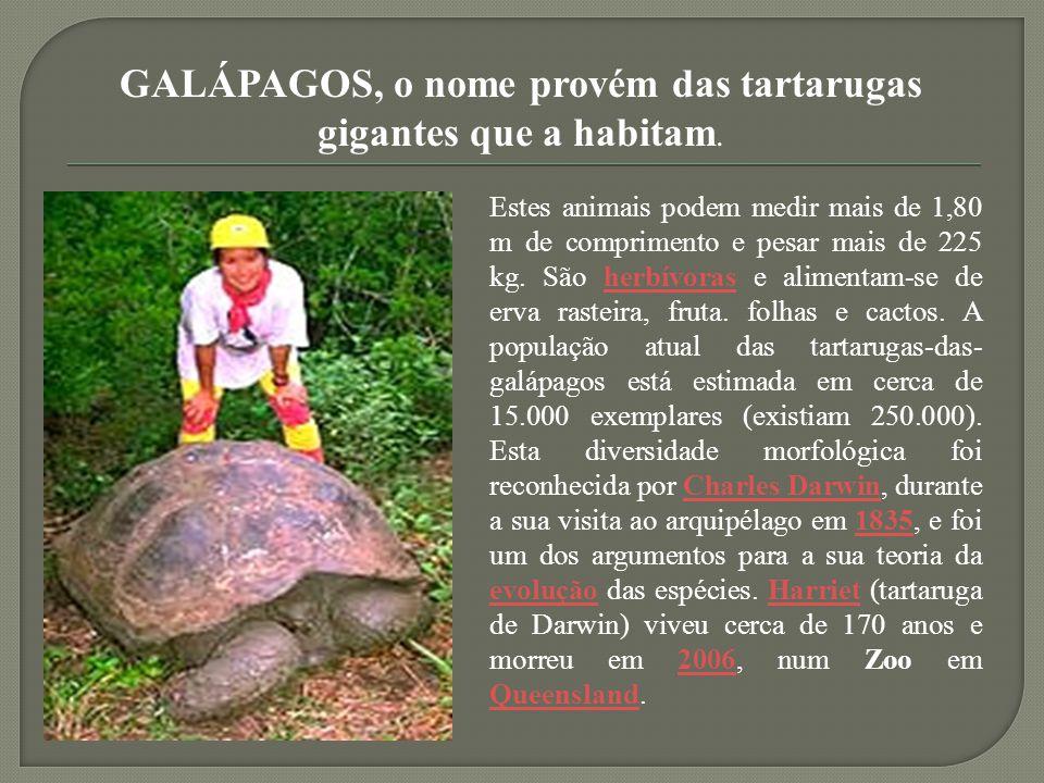 GALÁPAGOS, o nome provém das tartarugas gigantes que a habitam. Estes animais podem medir mais de 1,80 m de comprimento e pesar mais de 225 kg. São he