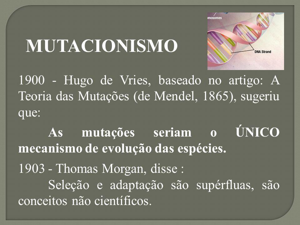 MUTACIONISMO 1900 - Hugo de Vries, baseado no artigo: A Teoria das Mutações (de Mendel, 1865), sugeriu que: As mutações seriam o ÚNICO mecanismo de ev