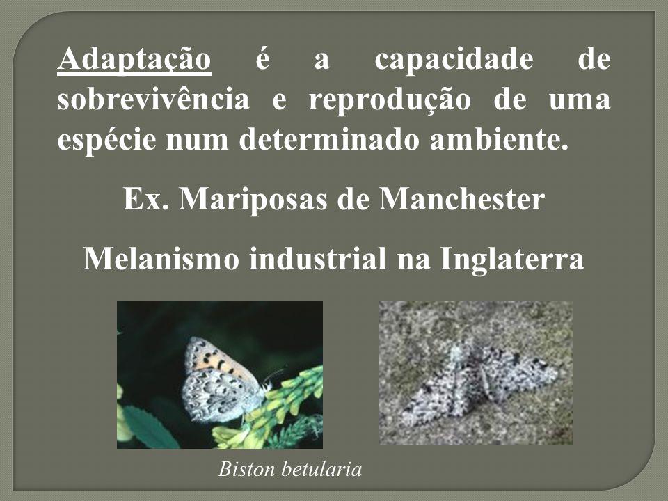 Adaptação é a capacidade de sobrevivência e reprodução de uma espécie num determinado ambiente.