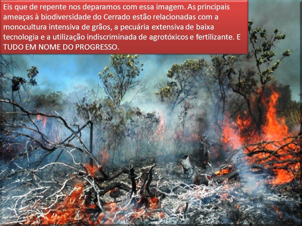 Eis que de repente nos deparamos com essa imagem. As principais ameaças à biodiversidade do Cerrado estão relacionadas com a monocultura intensiva de