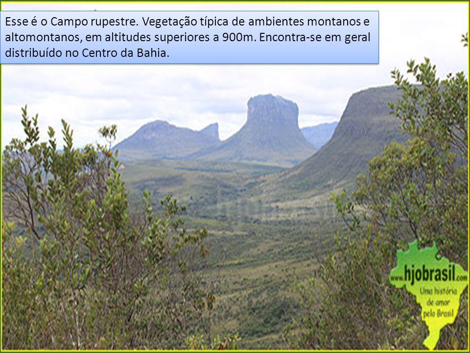 Esse é o Campo rupestre. Vegetação típica de ambientes montanos e altomontanos, em altitudes superiores a 900m. Encontra-se em geral distribuído no Ce