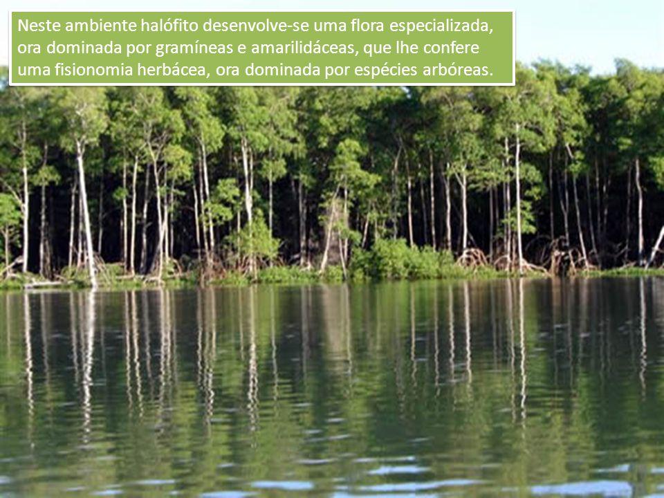 Neste ambiente halófito desenvolve-se uma flora especializada, ora dominada por gramíneas e amarilidáceas, que lhe confere uma fisionomia herbácea, or