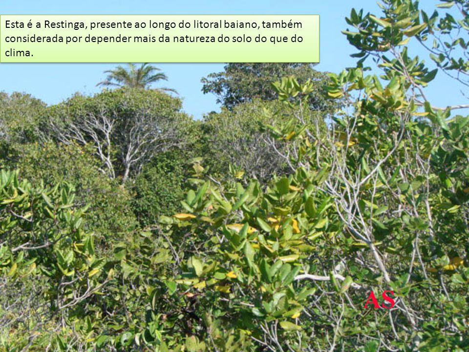 Esta é a Restinga, presente ao longo do litoral baiano, também considerada por depender mais da natureza do solo do que do clima.