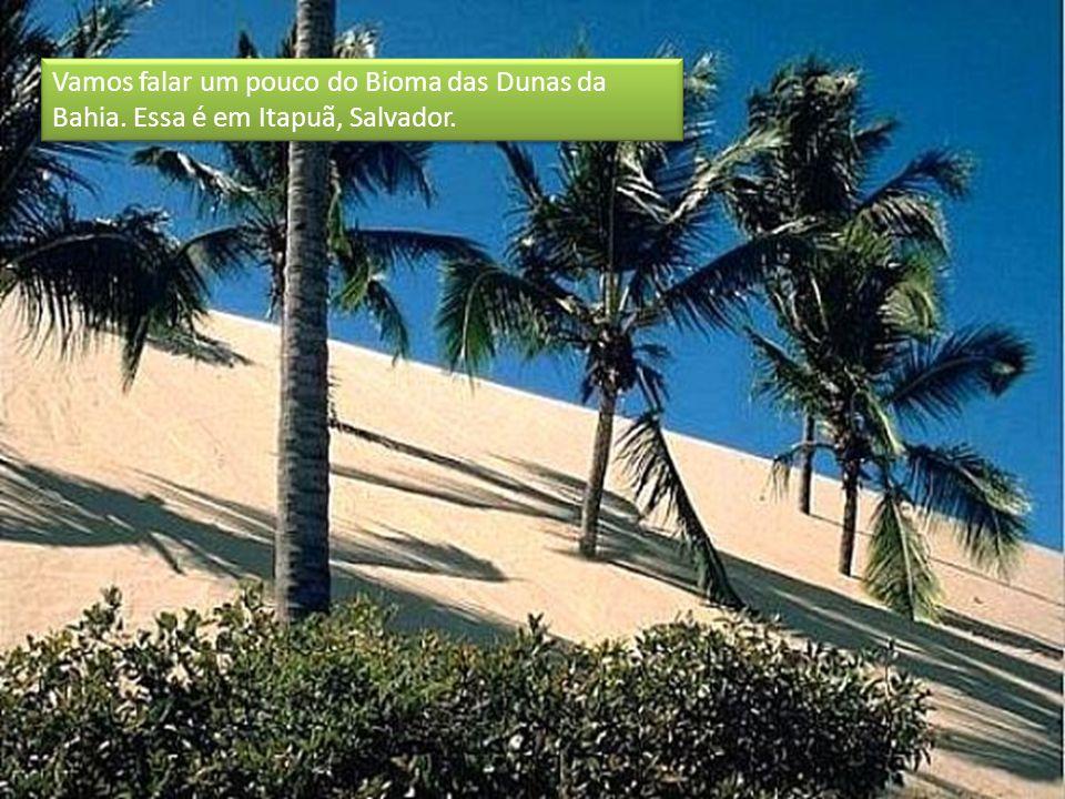 Vamos falar um pouco do Bioma das Dunas da Bahia. Essa é em Itapuã, Salvador.