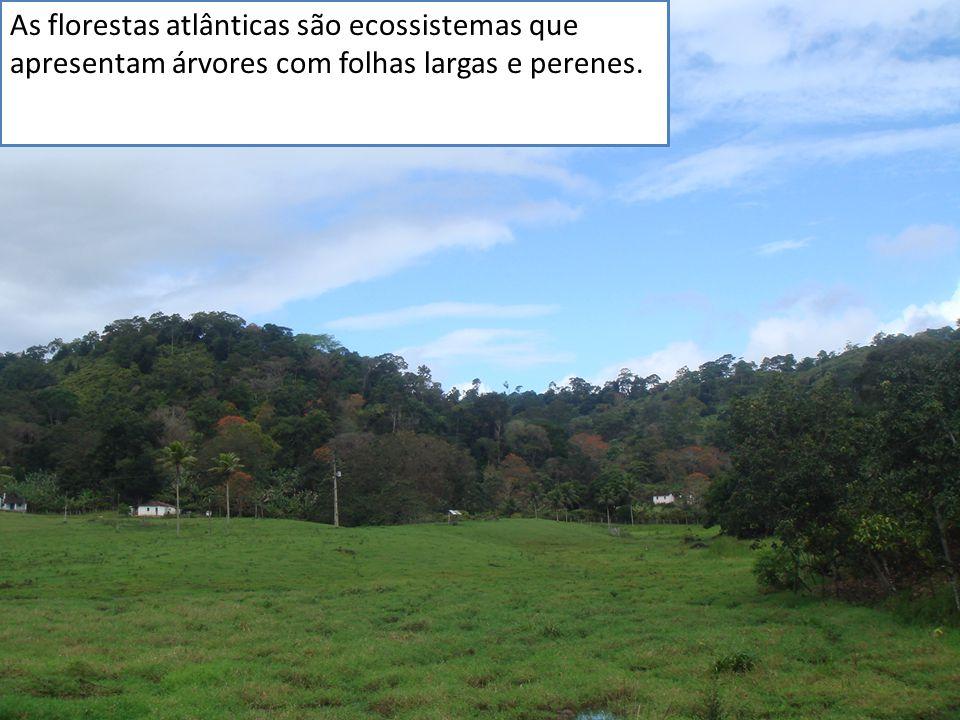 As florestas atlânticas são ecossistemas que apresentam árvores com folhas largas e perenes.