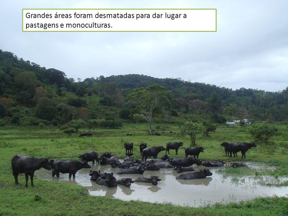 Grandes áreas foram desmatadas para dar lugar a pastagens e monoculturas.