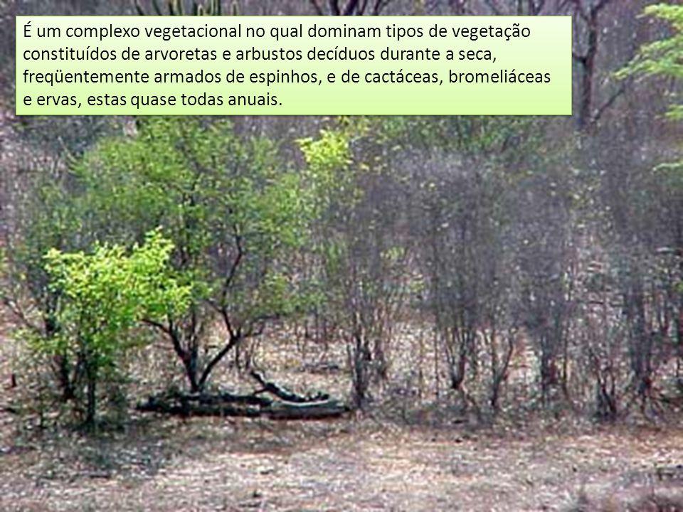 É um complexo vegetacional no qual dominam tipos de vegetação constituídos de arvoretas e arbustos decíduos durante a seca, freqüentemente armados de