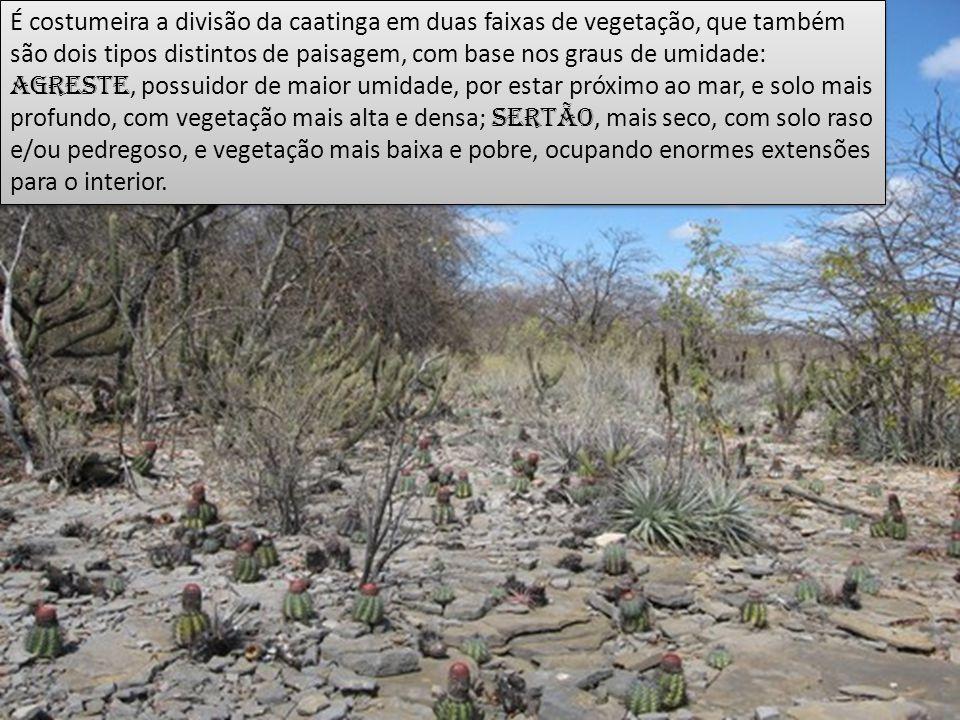 É costumeira a divisão da caatinga em duas faixas de vegetação, que também são dois tipos distintos de paisagem, com base nos graus de umidade: agrest