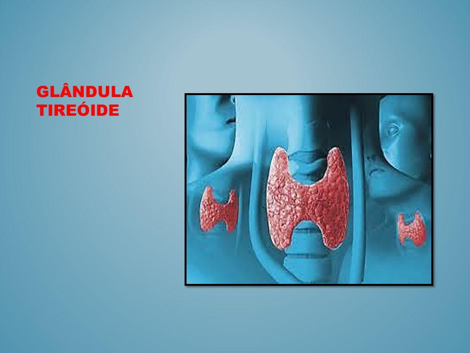 Introdução A tireóide é uma das maiores glândulas endócrinas do corpo.