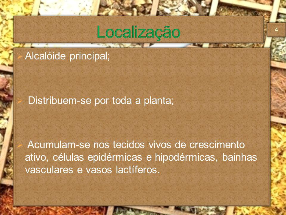 Alcalóide principal; Distribuem-se por toda a planta; Acumulam-se nos tecidos vivos de crescimento ativo, células epidérmicas e hipodérmicas, bainhas