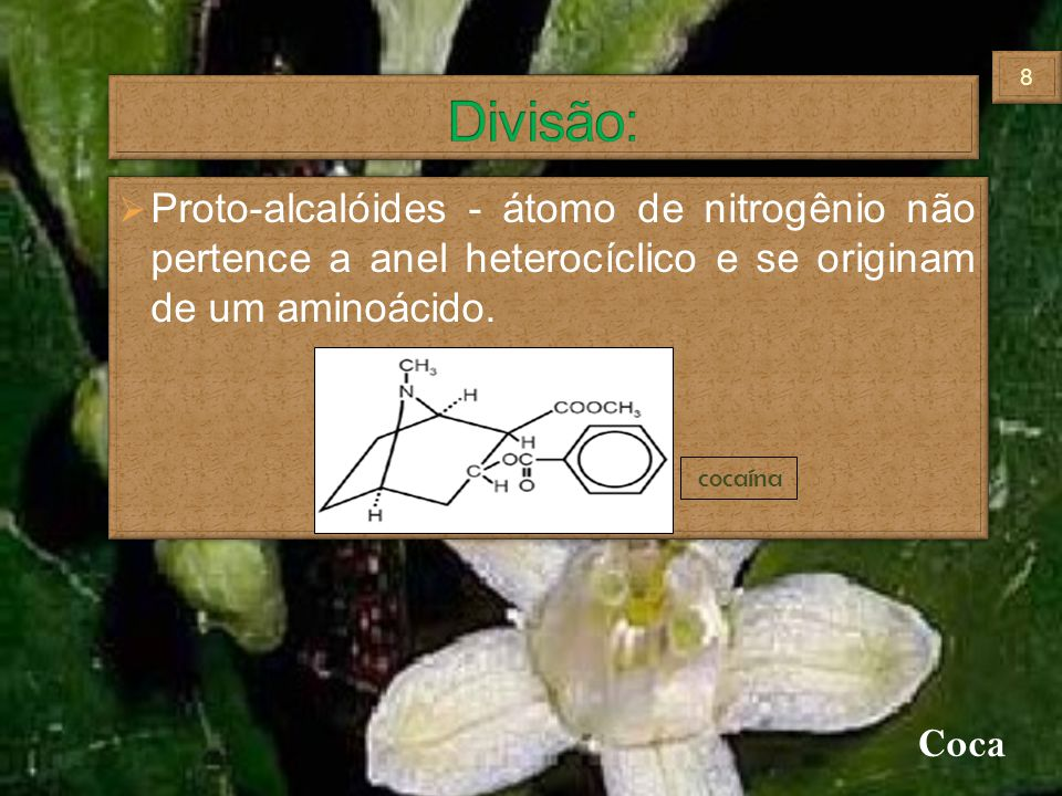Proto-alcalóides - átomo de nitrogênio não pertence a anel heterocíclico e se originam de um aminoácido. cocaína Coca 88