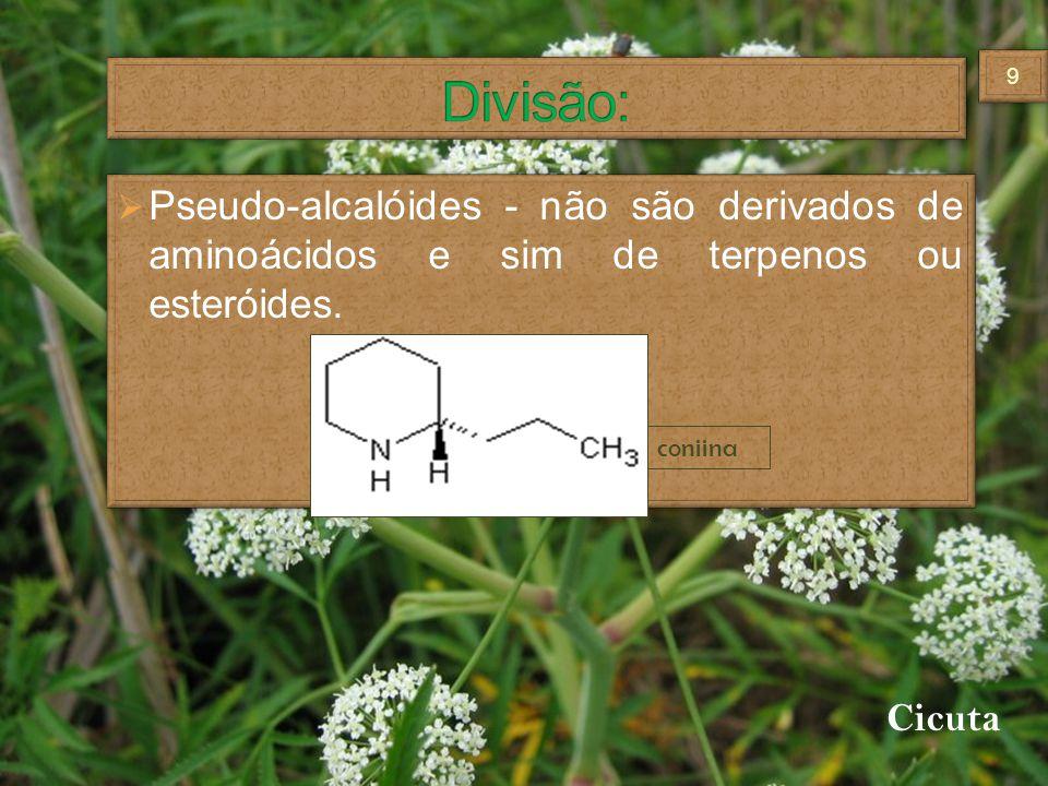 Pseudo-alcalóides - não são derivados de aminoácidos e sim de terpenos ou esteróides. coniina Cicuta 99