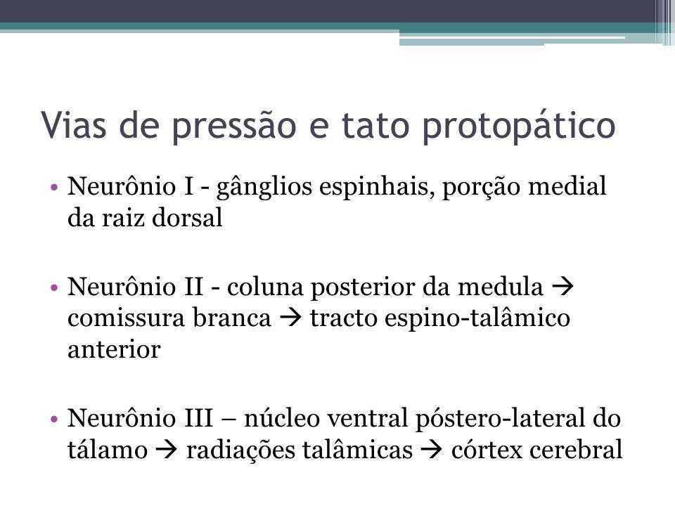 Vias de pressão e tato protopático Neurônio I - gânglios espinhais, porção medial da raiz dorsal Neurônio II - coluna posterior da medula comissura branca tracto espino-talâmico anterior Neurônio III – núcleo ventral póstero-lateral do tálamo radiações talâmicas córtex cerebral