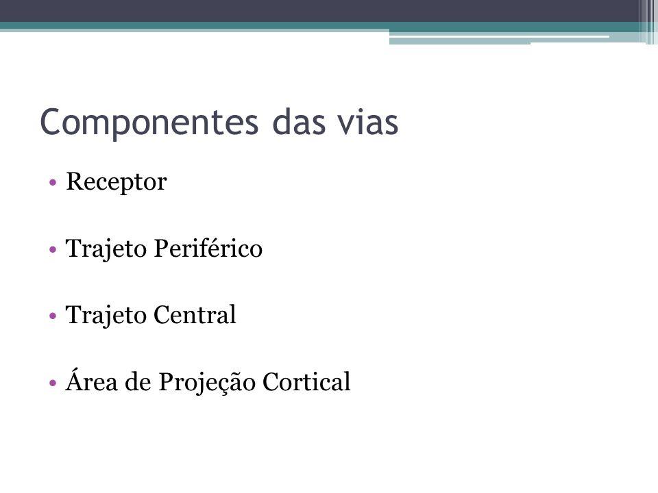 Componentes das vias Receptor Trajeto Periférico Trajeto Central Área de Projeção Cortical