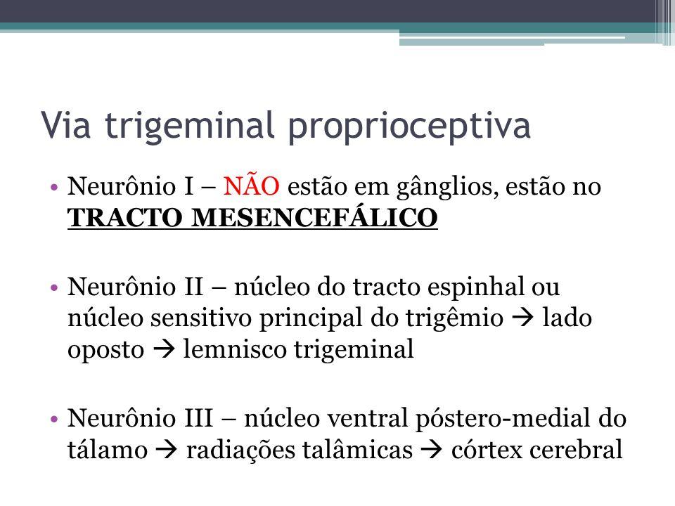 Via trigeminal proprioceptiva Neurônio I – NÃO estão em gânglios, estão no TRACTO MESENCEFÁLICO Neurônio II – núcleo do tracto espinhal ou núcleo sensitivo principal do trigêmio lado oposto lemnisco trigeminal Neurônio III – núcleo ventral póstero-medial do tálamo radiações talâmicas córtex cerebral