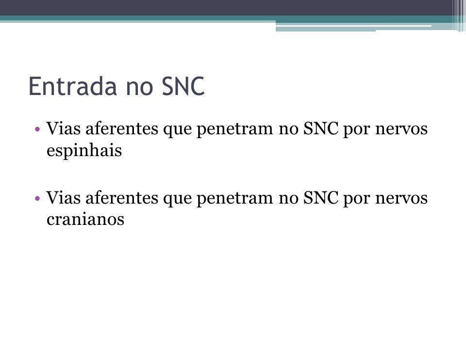 Entrada no SNC Vias aferentes que penetram no SNC por nervos espinhais Vias aferentes que penetram no SNC por nervos cranianos