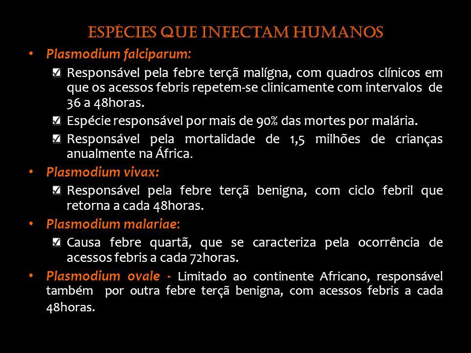 Espécies que infectam humanos Plasmodium falciparum : Responsável pela febre terçã malígna, com quadros clínicos em que os acessos febris repetem-se clinicamente com intervalos de 36 a 48horas.