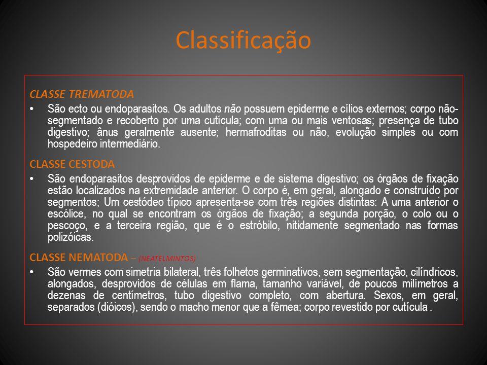 Classificação CLASSE TREMATODA São ecto ou endoparasitos. Os adultos não possuem epiderme e cílios externos; corpo não- segmentado e recoberto por uma