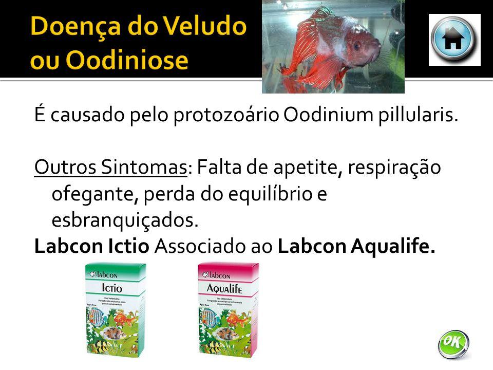 É causado pelo protozoário Oodinium pillularis.