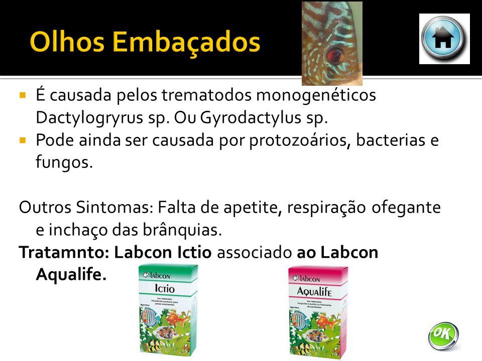 É causada pelos trematodos monogenéticos Dactylogryrus sp.