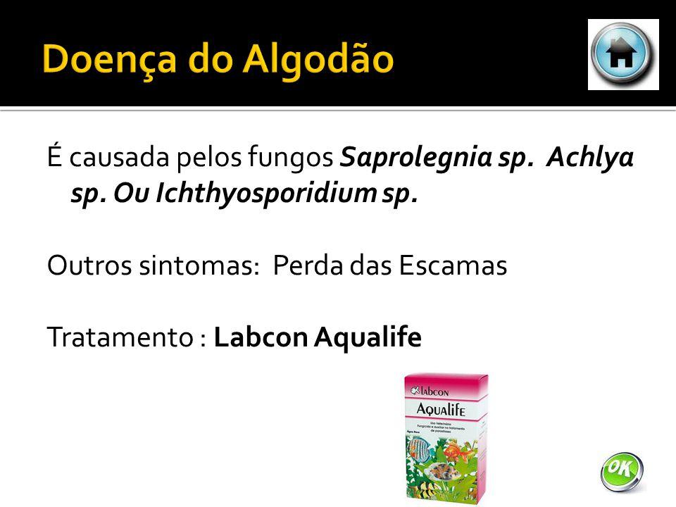 É causada pelos fungos Saprolegnia sp.Achlya sp. Ou Ichthyosporidium sp.