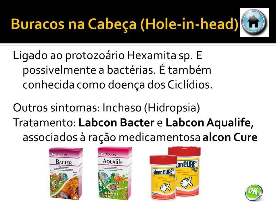 Ligado ao protozoário Hexamita sp.E possivelmente a bactérias.