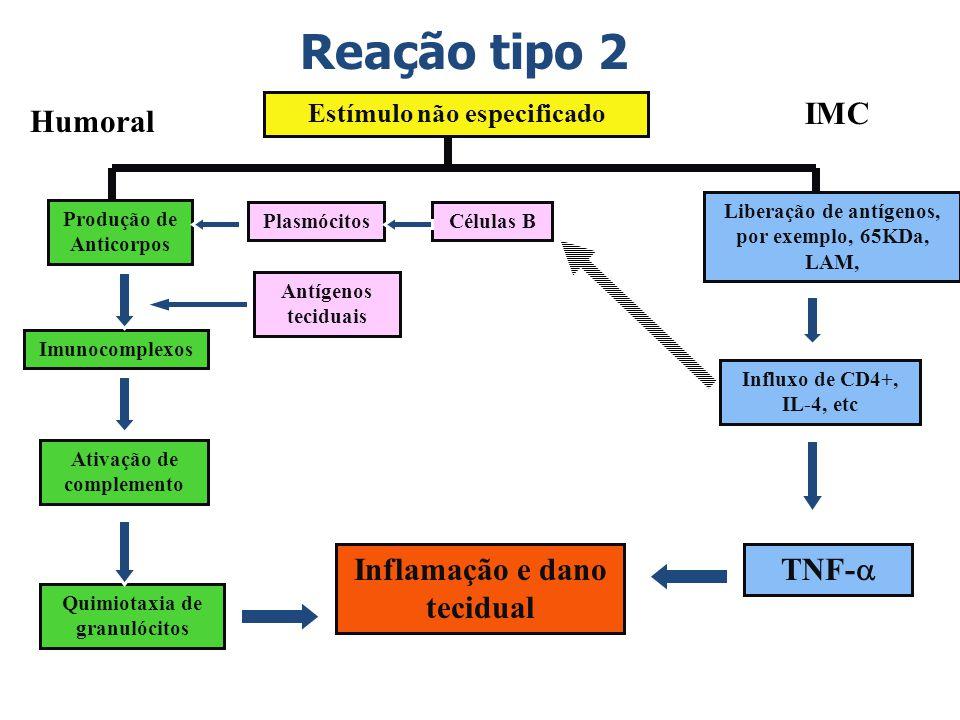 Reação tipo 2 Estímulo não especificado Produção de Anticorpos Imunocomplexos PlasmócitosCélulas B Antígenos teciduais Ativação de complemento Quimiot
