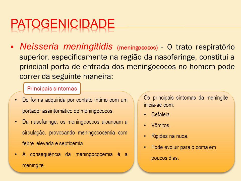 Neisseria meningitidis (meningococos) - O trato respiratório superior, especificamente na região da nasofaringe, constitui a principal porta de entrad