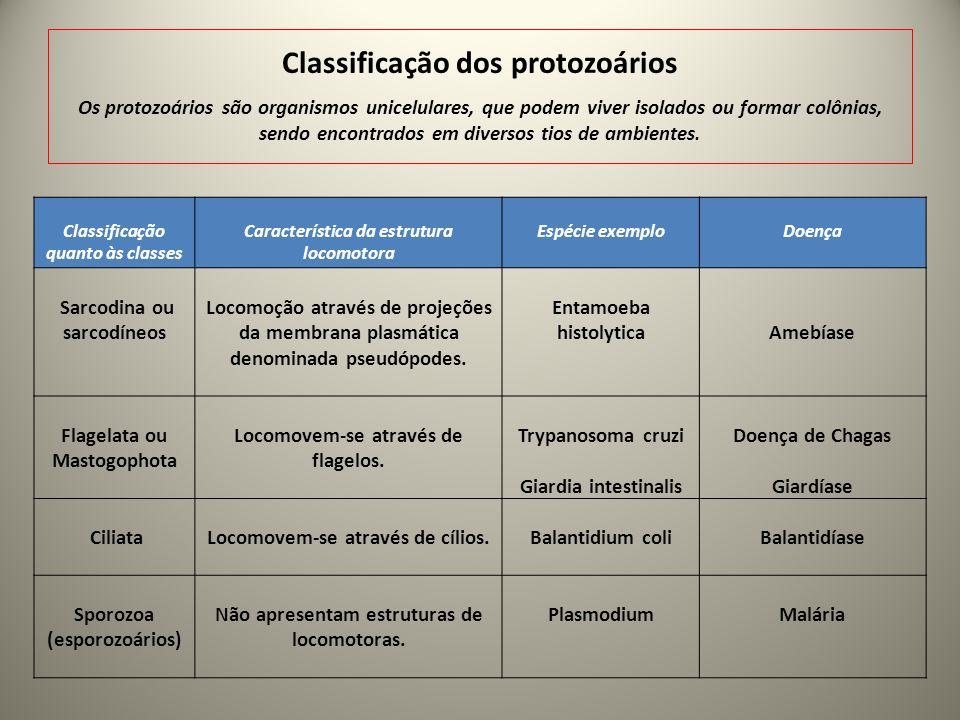 Classificação quanto às classes Característica da estrutura locomotora Espécie exemplo Doença Sarcodina ou sarcodíneos Locomoção através de projeções