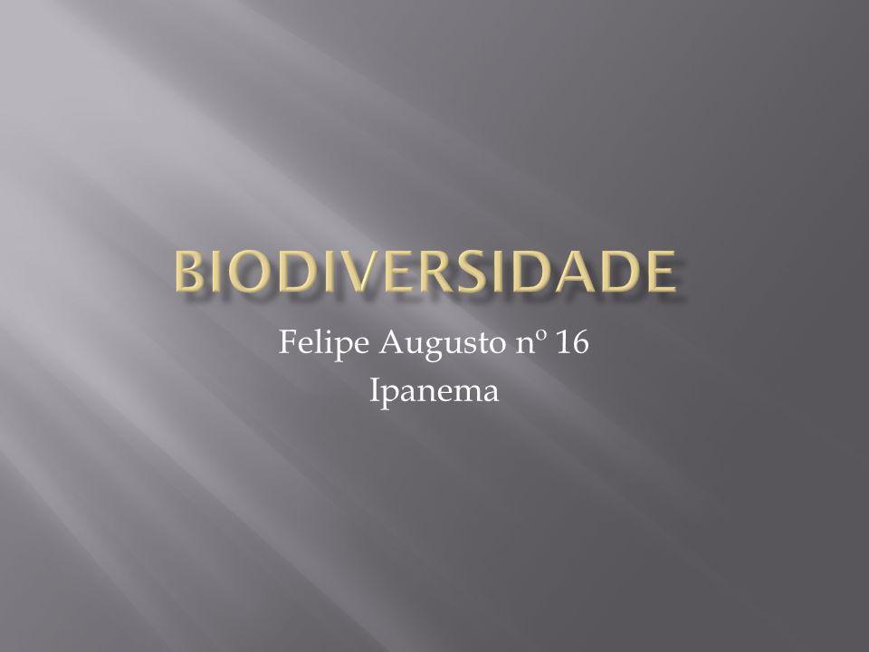 Felipe Augusto nº 16 Ipanema