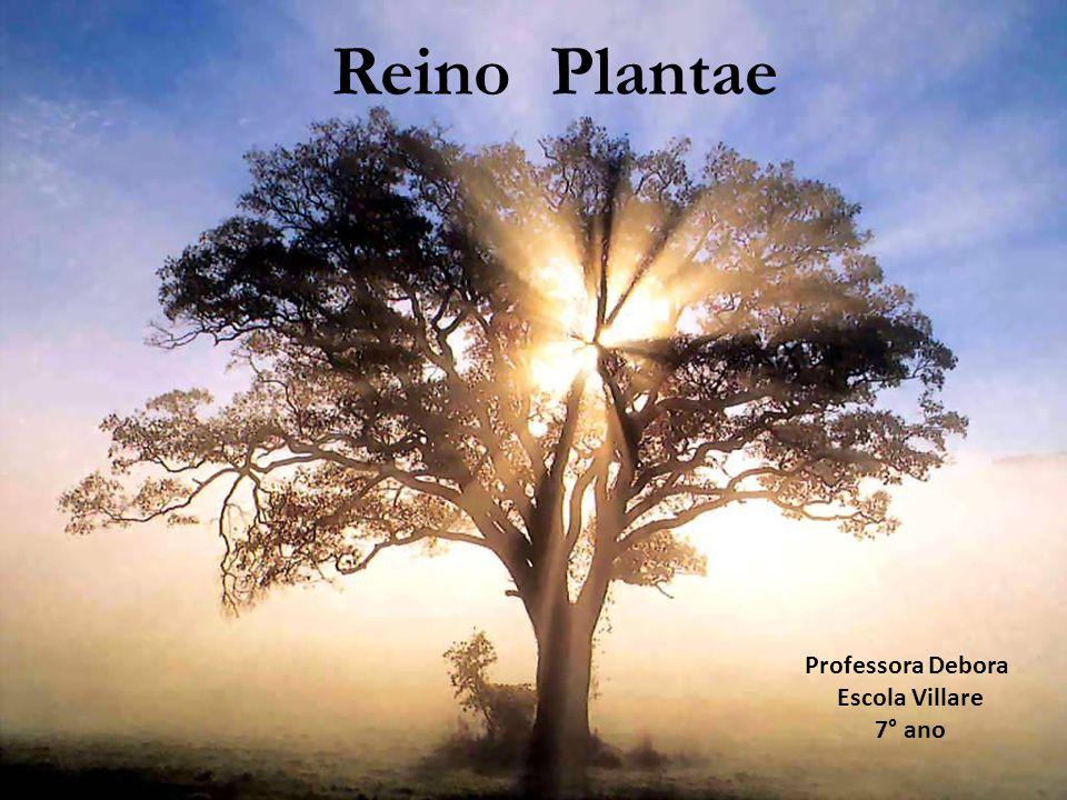 Reino das plantas Algumas características gerais EUCARIONTES; PLURICELULARES; AUTÓTROFOS; FOTOSSINTETIZANTES; PRESENÇA DE SEIVA (BRUTA E ELABORADA); MAIORIA TERRESTRES; AMIDO COMO CARBOIDRATO DE RESERVA; PAREDE CELULAR (celulose), ESTÔMATOS (troca de gases e água entre a folha e o meio); CLOROPLASTOS (fotossíntese) ; TAMANHOS VARIADOS;